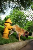 Cómo tener un perro de orinar en el patio