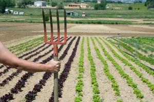 Cómo planificar un jardín de verduras de primavera
