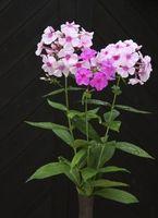 Fácil de hacer arreglos florales