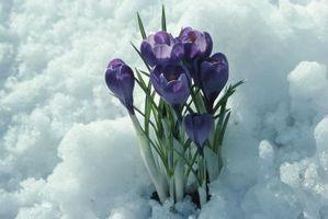 Flores florece en enero