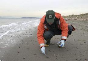 Cómo probar para el nitrógeno en el suelo
