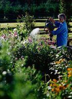 Jardín mes a mes y la lista de control de cuidado césped