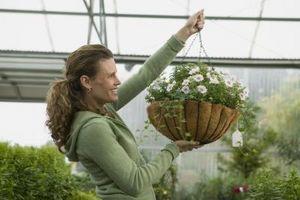 Cómo colgar plantas perennes