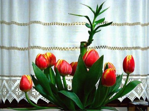 Cómo hacer arreglos florales con tulipanes