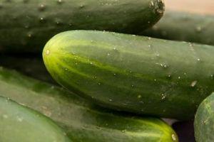 Cómo cultivar pepinos de escalada