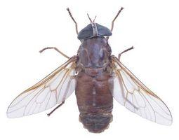 ¿Cómo deshacerse de una invasión de mosca