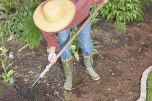 Cómo matar el hongo en el suelo de la planta