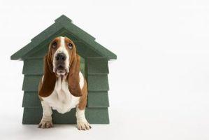Pasos para construir casa de perro